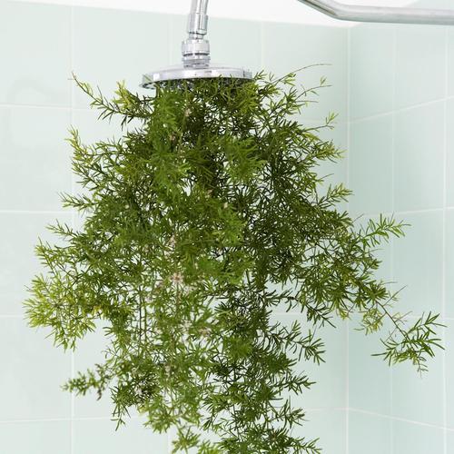 7 teintes qui rafra chissent peinture - Plante pour salle de bain sombre ...