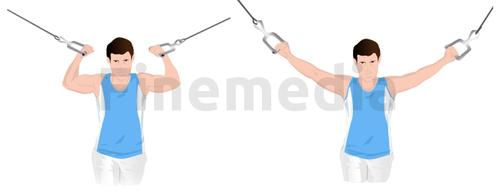 Musculation des biceps avec poulie à vis
