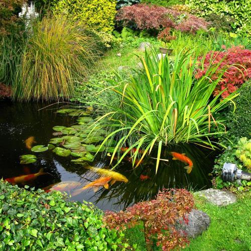 Cr er un point d 39 eau dans le jardin ooreka - Point d eau dans le jardin ...