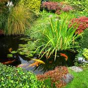 bassin de jardin écosystème