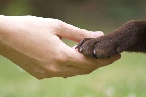 Éducation du chien: récompenses, punitions et jeu
