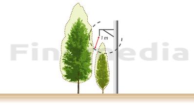 Distance de sécurité EDF à respecter pour le plantage d'un arbre aux abords d'une installation électrique.