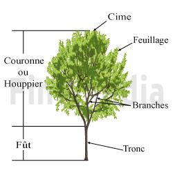 Laguer pourquoi laguer les arbres et les v g taux for Prix de l elagage d un arbre