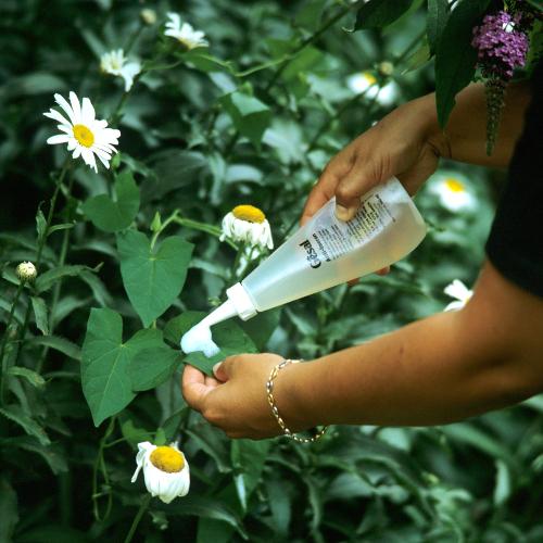 Lutter contre le liseron jardinage - Comment eradiquer le liseron ...