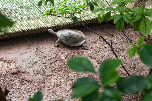 Enclos tortue pour jardin o l 39 installer ooreka for Amenagement jardin pour tortue