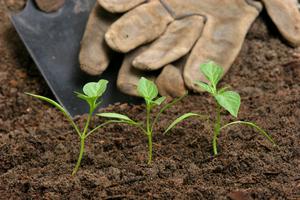 Quel engrais utiliser dans votre jardin ?