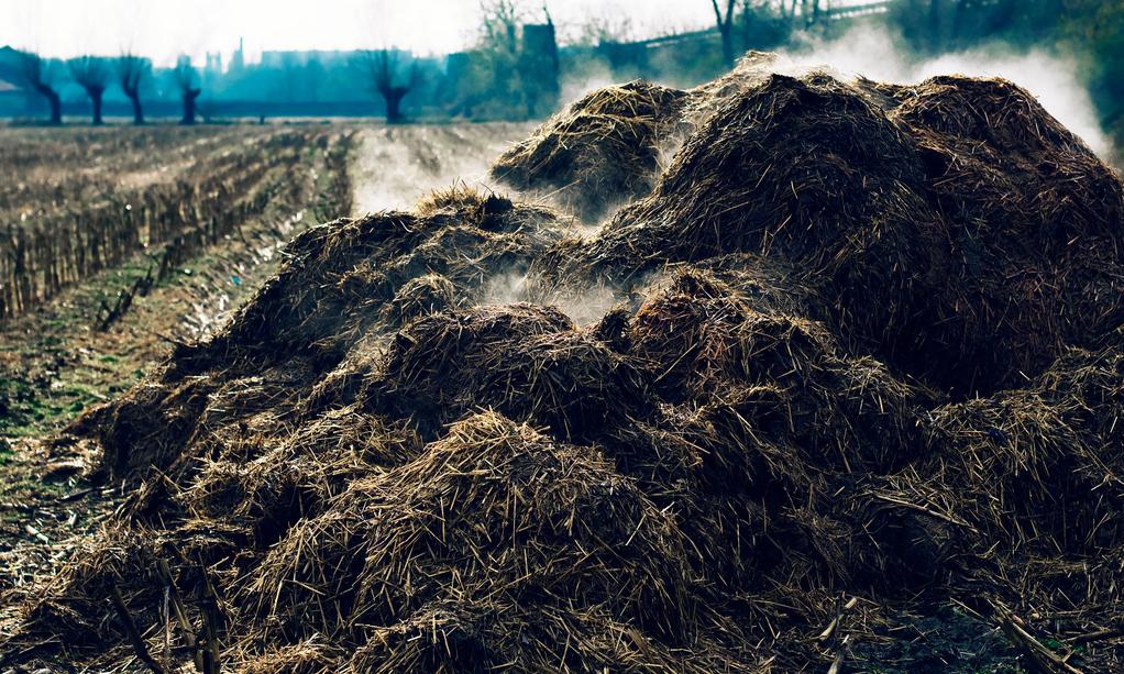 Fumier de cheval ooreka - Le fumier de cheval est il bon pour le jardin ...