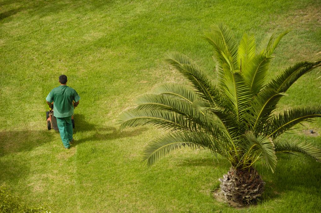Engrais palmier choix d 39 un engrais de palmier ooreka - Racine d un palmier ...