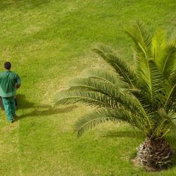Engrais pour palmier
