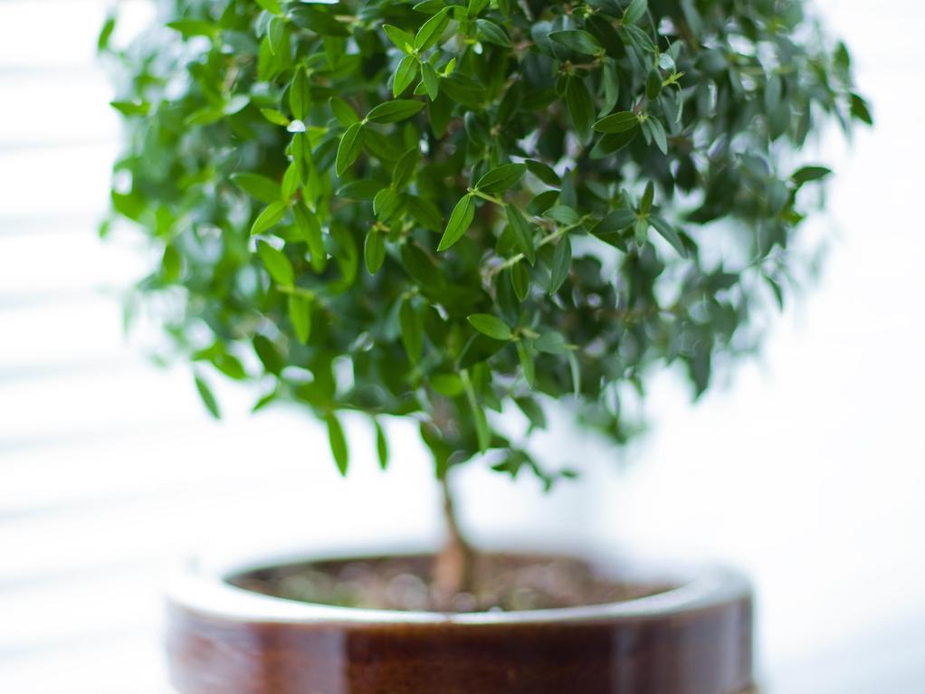 Mettre une plante dans sa chambre bonne ou mauvaise id e for Plante pour chambre