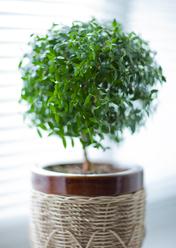 Engrais plante d 39 int rieur ooreka - Petite plante d interieur ...