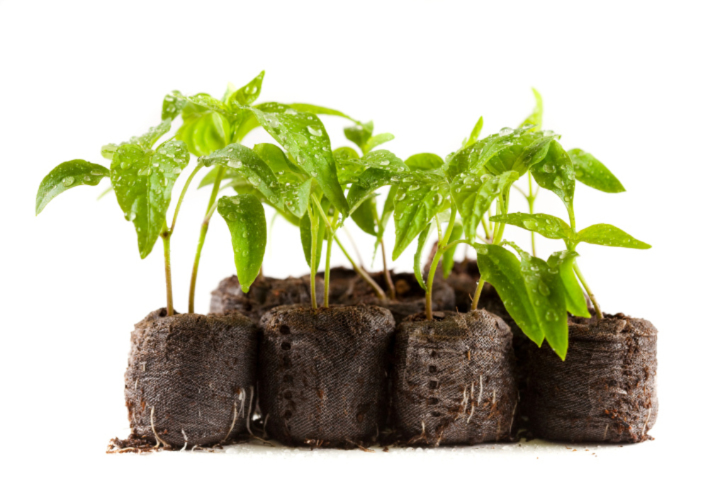 Croisement de plantes : principe et utilité