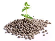 Engrais arbre fruitier