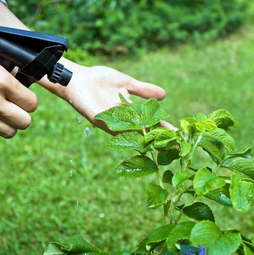 Éliminer les plantes indésirables