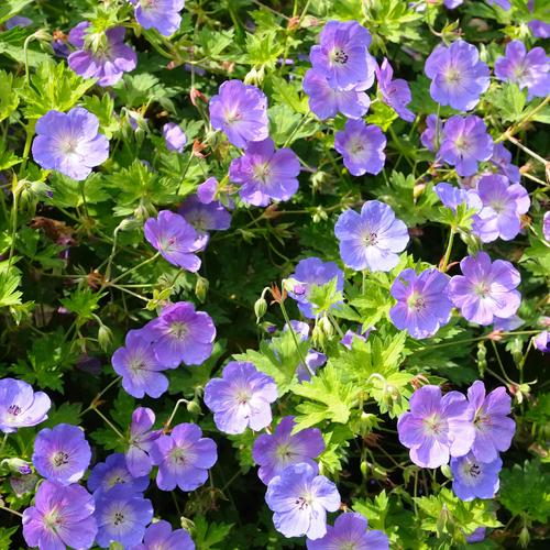 Fleur qui fleurit en mai liste ooreka - Plante a fleur jaune 6 lettres ...