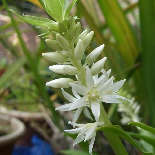 plante d'ombre : liste - ooreka