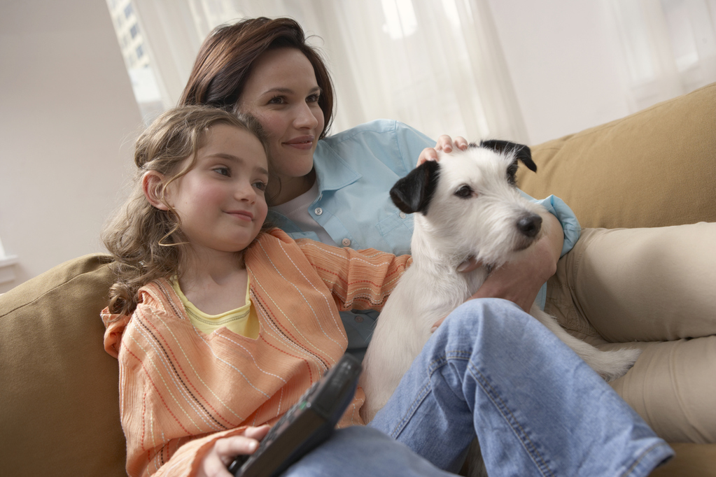 Famille d'accueil pour chien : principe et réglementation