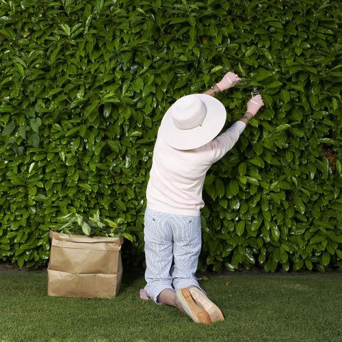 Aromates arbustes quoi planter en ao t ooreka - Quoi planter en juillet ...