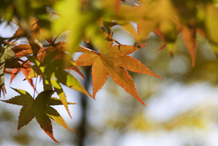 Feuilles de différentes couleurs sur une branche