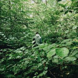 10 critères pour reconnaître les feuilles d'arbres