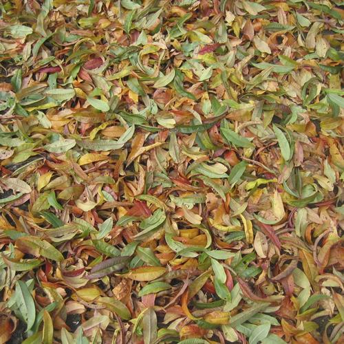 Quels sont les déchets du jardin pouvant être intégrés au compost ?