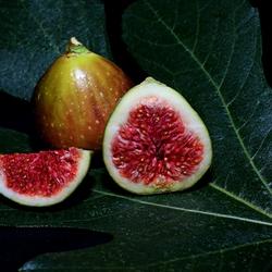 7 fruits d'automne