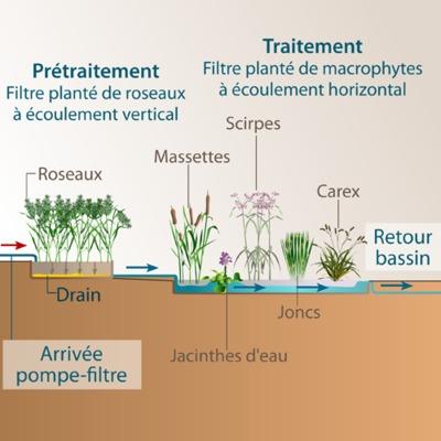 Schéma de fonctionnement d'un filtre planté