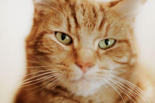 FIV : sida du chat