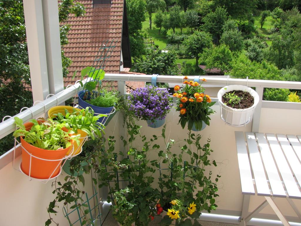 Plantes Aromatiques En Jardinière jardinière pour balcon : types, infos, conseils, prix - ooreka