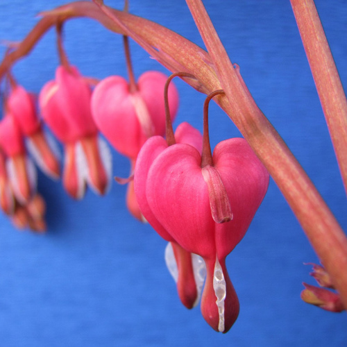 bulbe a planter en mars