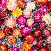 cultiver des plantes pour bouquets de fleurs s ch es. Black Bedroom Furniture Sets. Home Design Ideas