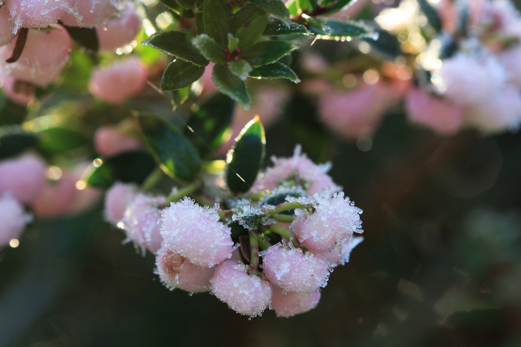 Fleurs Rustiques Liste Ooreka