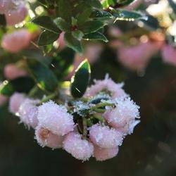 Les fleurs rustiques