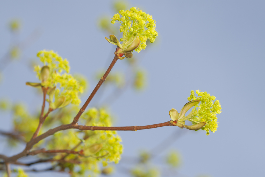Fleur De Bach Elm Definition Et Utilisations Ooreka