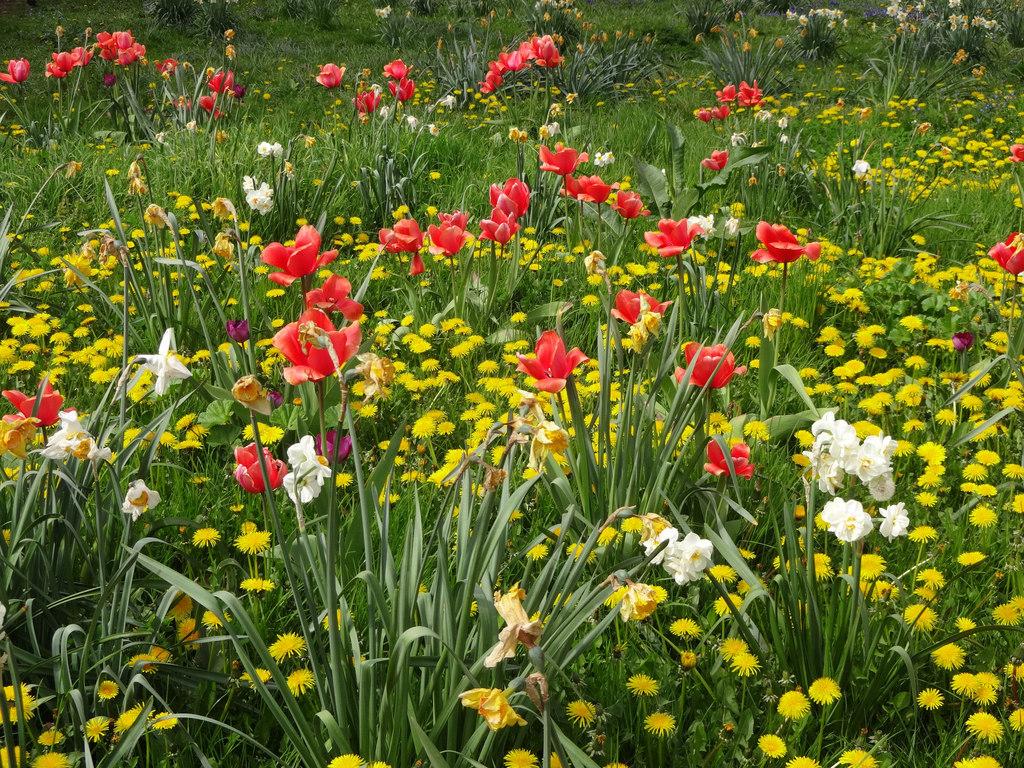 Travaux de jardinage en avril ooreka - Que faire au jardin en avril ...