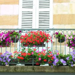 fleurs hivernales pour balcon. Black Bedroom Furniture Sets. Home Design Ideas