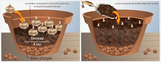 forcer des bulbes jardinage