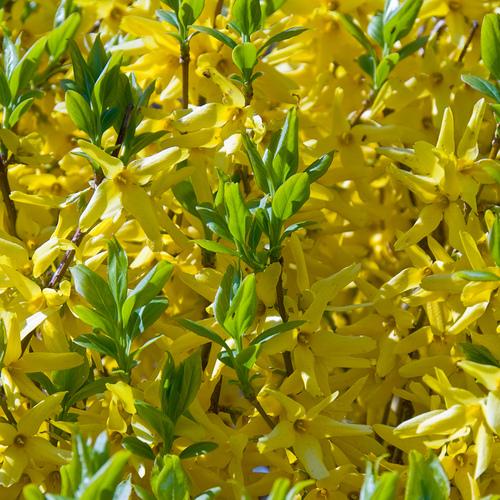 Plante Tombante Liste Ooreka