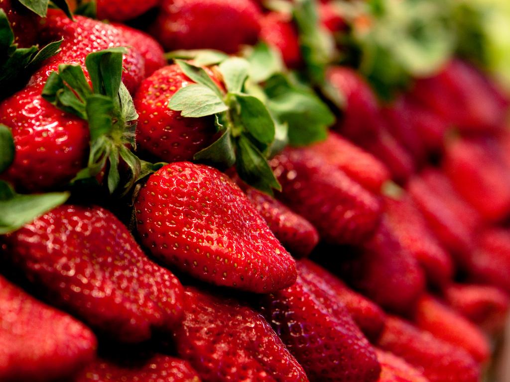 fraise ciflorette : origine, culture de la fraise ciflorette - ooreka