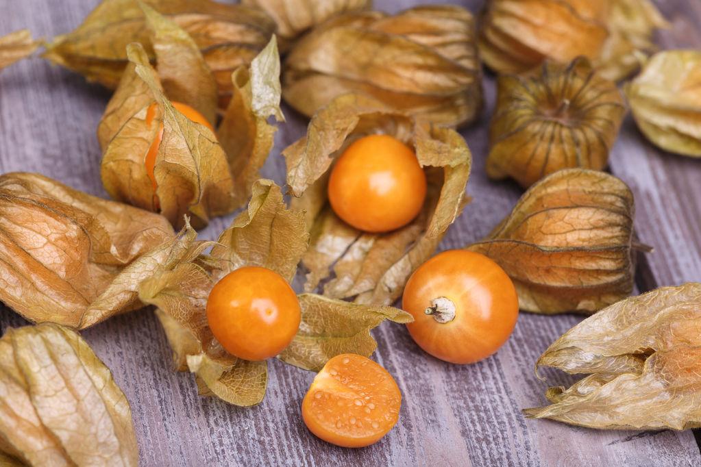 Fruit du physalis bienfaits du fruit du physalis ooreka - Fruit de l amandier ...
