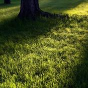 pr parer le terrain pour une pelouse. Black Bedroom Furniture Sets. Home Design Ideas
