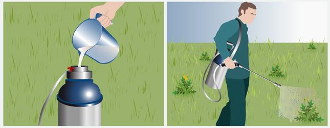 D sherber une pelouse gazon - Desherbant total naturel ...