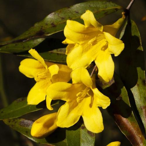 Fleur Jaune Liste Ooreka
