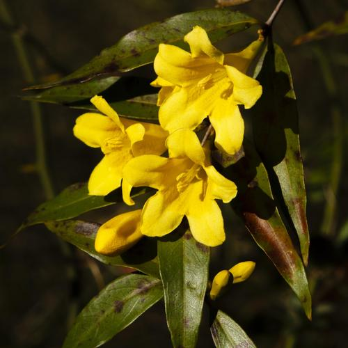 Fleur Grimpante Liste Ooreka