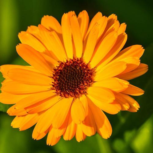 Fleurs Jaunes Oranges Vivaces Journalphoto