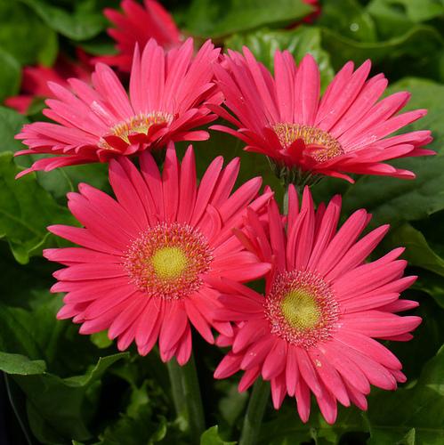 plante vivace fleurie : liste - ooreka