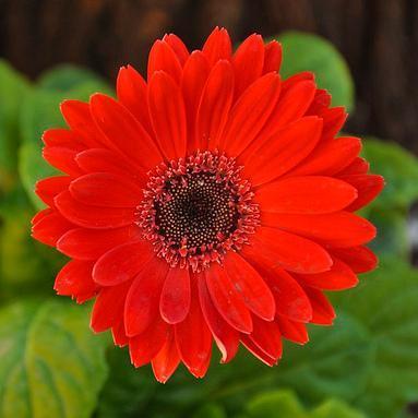 Fleur Rouge Liste Ooreka
