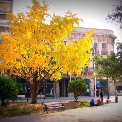 Liste des arbres parasols ooreka for Arbre de jardin pour ombre