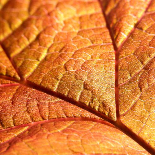 Travaux de jardinage en octobre ooreka - Que semer en octobre ...