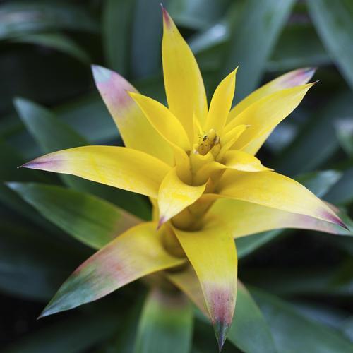 fleur de noël : liste - ooreka